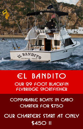 Cabo fishing charters low priced fishing charters in for Cabo san lucas fishing charters prices